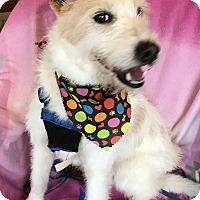 Adopt A Pet :: Rhett - Battleboro, VT