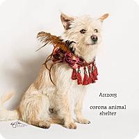 Adopt A Pet :: KENNEL 13 - Corona, CA