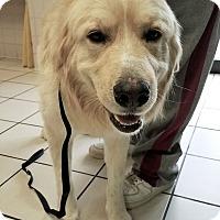 Adopt A Pet :: Mallie - BIRMINGHAM, AL