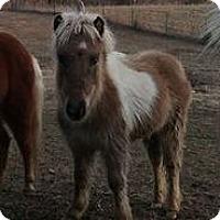 Adopt A Pet :: Tinklerbell - Loudon, TN