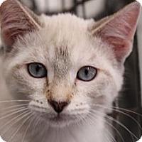Adopt A Pet :: Ally - Santa Monica, CA