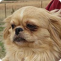 Adopt A Pet :: Gorgeous George - Greenville, RI
