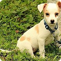 Adopt A Pet :: Paige - Brattleboro, VT
