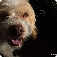 Adopt A Pet :: Teddy - Mission Viejo, CA