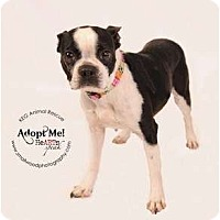 Adopt A Pet :: Princess - Glastonbury, CT
