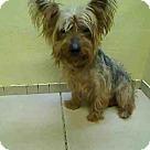 Adopt A Pet :: VALENTINO