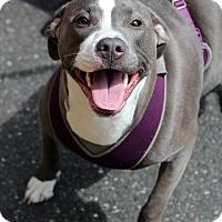 Adopt A Pet :: Jasmine - Mount Laurel, NJ