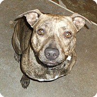 Adopt A Pet :: Simone - Geneseo, IL