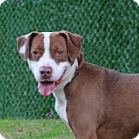 Adopt A Pet :: Danny - Port Washington, NY