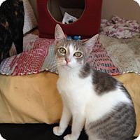 Adopt A Pet :: Trisket - Stafford, VA