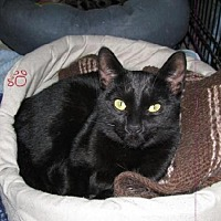 Adopt A Pet :: Georgette - Markham, ON