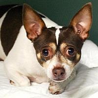 Adopt A Pet :: Mylo - Staten Island, NY