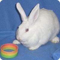 Adopt A Pet :: Harlow - Woburn, MA