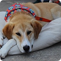 Adopt A Pet :: Duncan - Pinehurst, NC