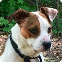 Adopt A Pet :: Russ - Brattleboro, VT