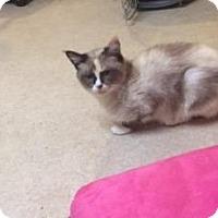 Adopt A Pet :: Heidi *In Foster* - Ottawa, KS