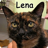 Adopt A Pet :: Lena - Warren, PA
