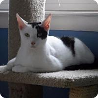 Adopt A Pet :: Eric - Fairfax, VA