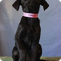 Adopt A Pet :: Charlotte - Waldorf, MD