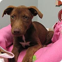 Adopt A Pet :: Nessie - Groton, MA