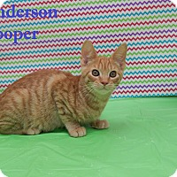 Adopt A Pet :: Anderson Pooper - Bucyrus, OH