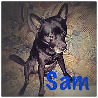 Adopt A Pet :: SAM - Charlotte, NC