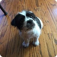 Adopt A Pet :: Dak - Flower Mound, TX
