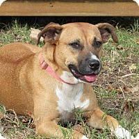 Adopt A Pet :: Tara - Aurora, CO