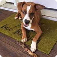 Adopt A Pet :: Ary- Courtesy Listing - Fredericksburg, VA