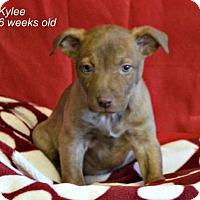 Adopt A Pet :: Kylee - Yreka, CA