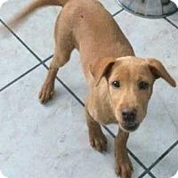Adopt A Pet :: Naranga - Hillside, IL