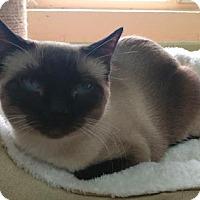 Adopt A Pet :: Chinda - Las Cruces, NM
