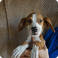 Adopt A Pet :: Tahiti - Oviedo, FL