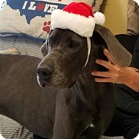 Adopt A Pet :: Moose - Savannah, TN