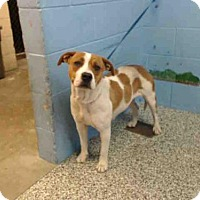 Adopt A Pet :: A500643 - San Bernardino, CA