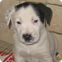 Adopt A Pet :: Brick(ADOPTED!) - Chicago, IL
