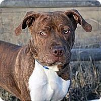 Adopt A Pet :: Buzz - Cheyenne, WY