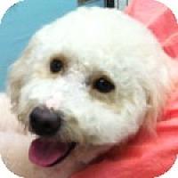 Adopt A Pet :: Buddy - La Costa, CA