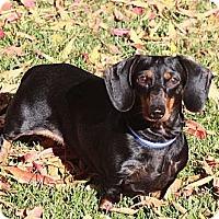 Adopt A Pet :: Helen of Troy - San Jose, CA