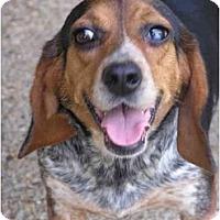 Adopt A Pet :: Mary Sue - Prairieville, LA