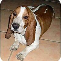 Adopt A Pet :: Kipling - Phoenix, AZ
