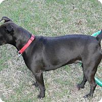 Adopt A Pet :: Cindy - Umatilla, FL