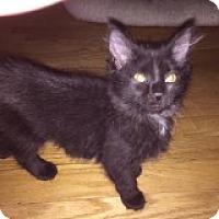 Adopt A Pet :: Sasha - Riverside, RI