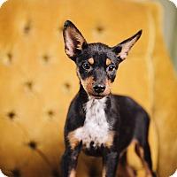 Adopt A Pet :: C.B - Portland, OR