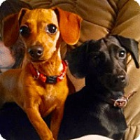 Adopt A Pet :: Apple & Punkin - Georgetown, KY