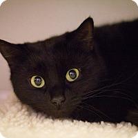 Adopt A Pet :: Melaina. - Grayslake, IL