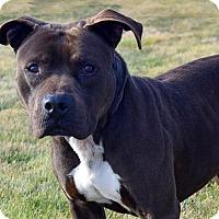 Adopt A Pet :: Amos D-68444 - Westampton, NJ