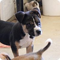 Adopt A Pet :: Oak - Harmony, Glocester, RI