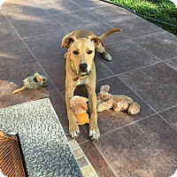 Adopt A Pet :: Diego - San Ysidro, CA
