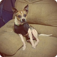 Adopt A Pet :: Tanner loves kids! - Madison, TN